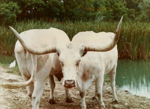 Longhorn reciprocal scan0001